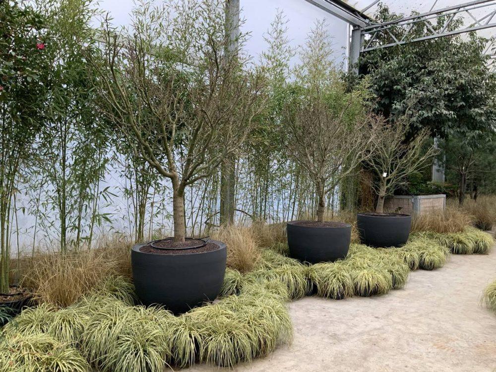 Tolles Keramik Pflanzgefäß Outdoor der Superlative Garten und Wohnen Münster